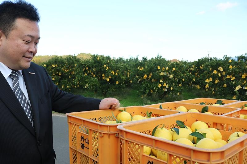 宮崎を代表する果物「日向夏」の産地を訪問。12月中旬からハウスものが出荷され、これからがまさに旬の柑橘